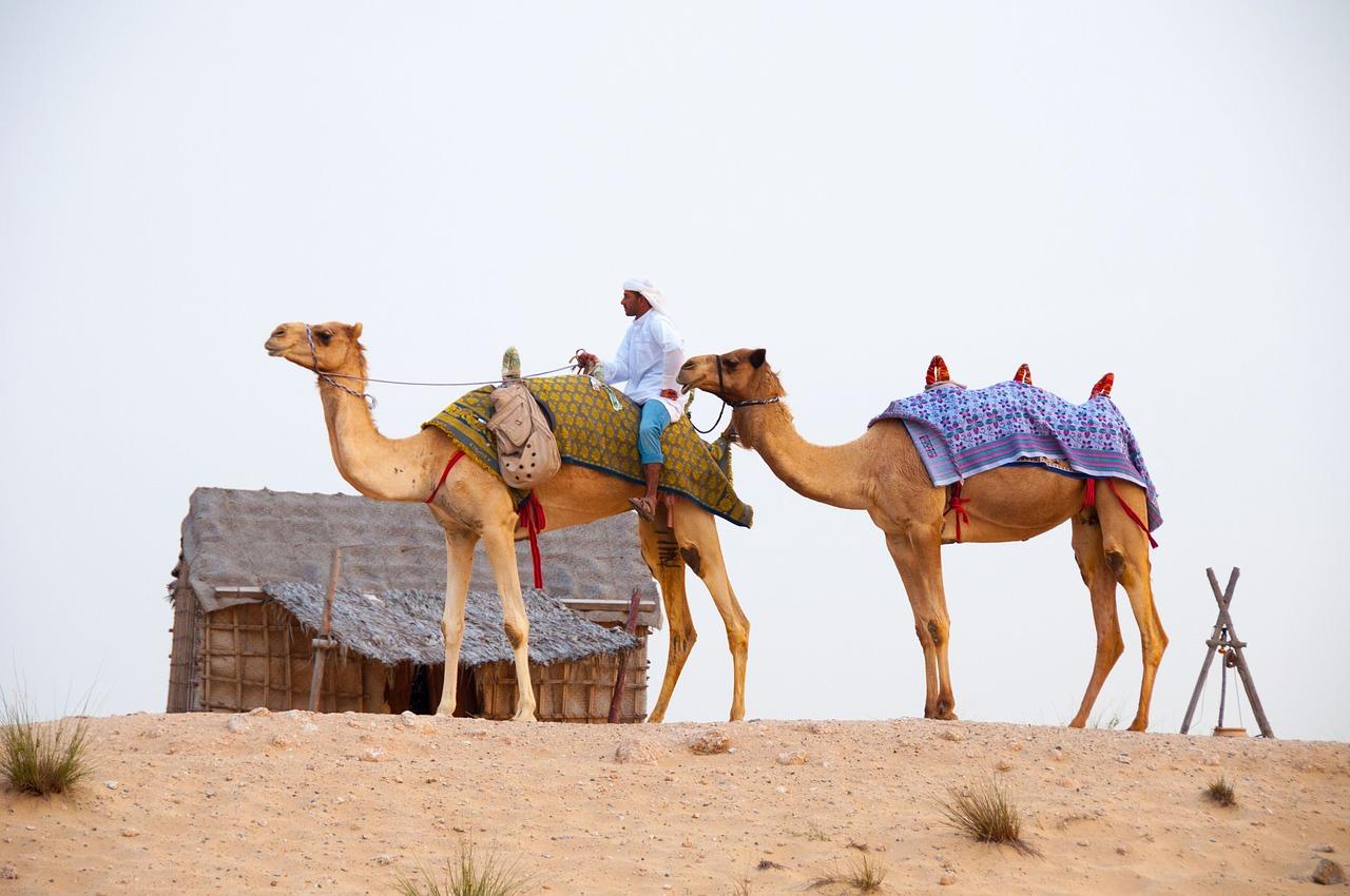 Fancy a camel ride?